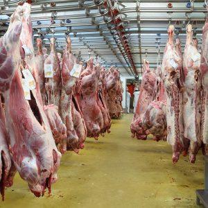 Ouvrier d'abattoir et découpe des viandes 9