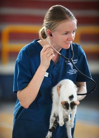 Et si vous votre prochain métier intégrait les animaux? 13