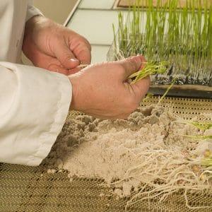 Le poste de technicien / technicienne semences 3