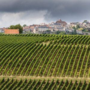 exploitation viticole