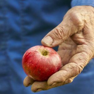 récolte des fruits